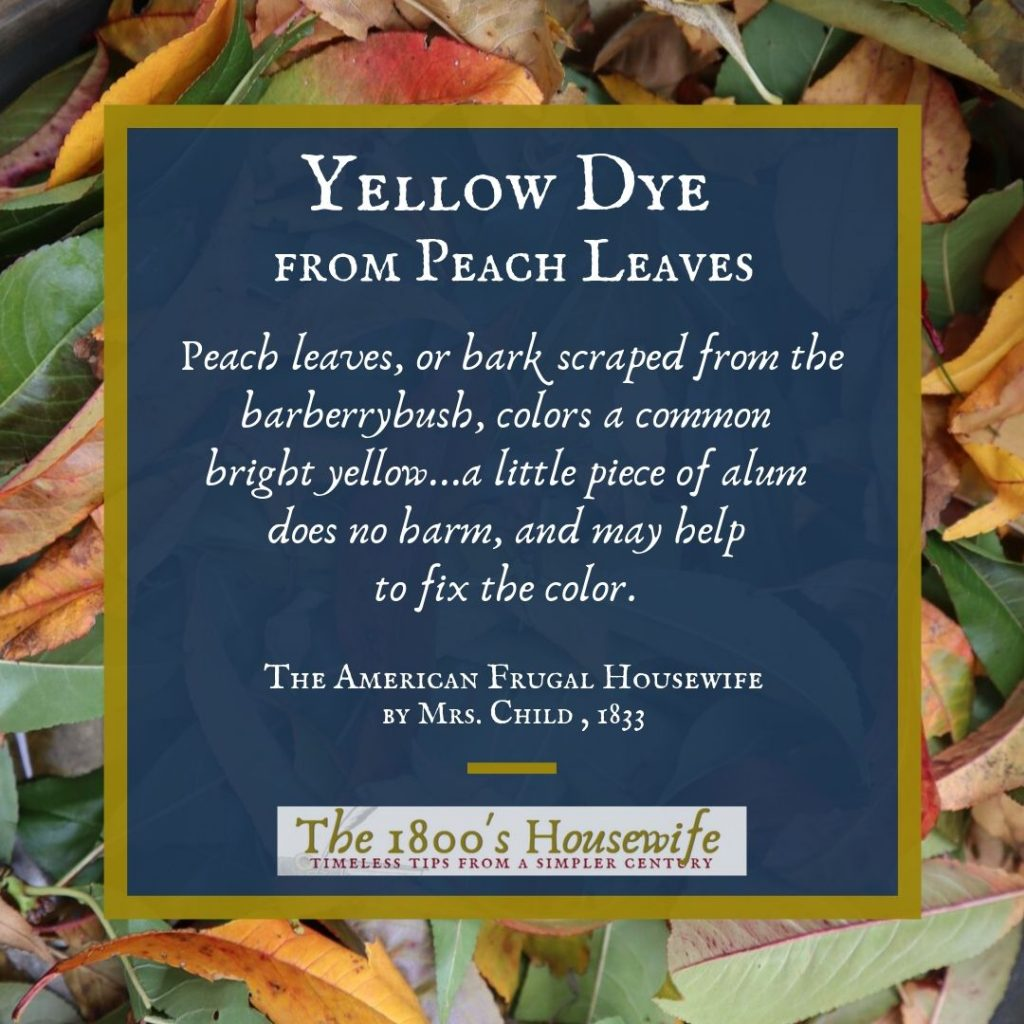 Yellow Dye from peach leaves